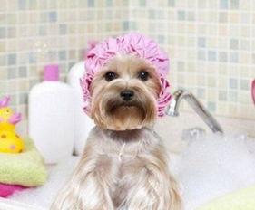 狗得了皮肤病会传染给人吗