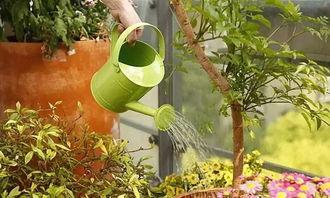 养花出差浇水