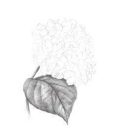 如何剪简单树叶?