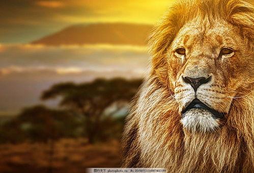 若是狮子,何须炫耀