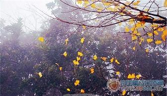 关于秋雨的说说