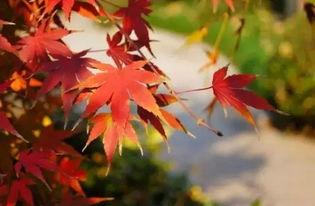 写两行描写秋景的古诗句