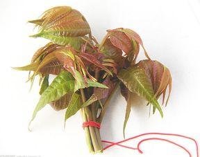 北方的香椿 最好吃的树叶