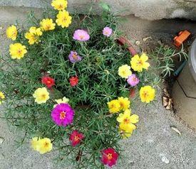 为什么种花不叫种花而叫养花