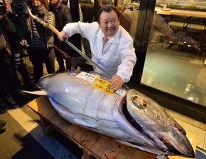 东京金枪鱼拍出436万元 这一价格达到2016年成交价的5.3倍
