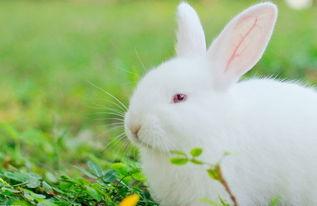 兔子作文高中