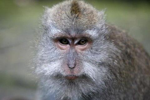 农历1992年8月9日出生的猴是什么猴(92年农历8月初一出生女属猴今年运