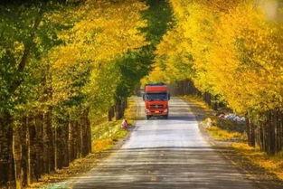 额济纳 三千年的守望,只为最美的秋天