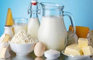 一带一路上的牛奶传奇历史
