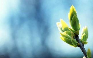 描写桔梗花的古诗句