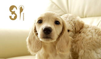 狗狗干洗粉怎么用教程