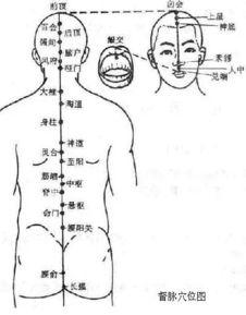 下出于会阴,经阴阜,沿腹部正中线上行,经咽喉部(天突穴),到达...