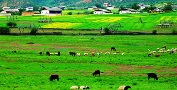 云南旅游自然景区