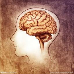 人类大脑创意绘画图片