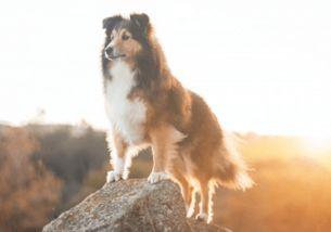 给狗狗取什么名字好