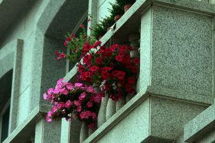 顶楼楼台养花草怎么防水