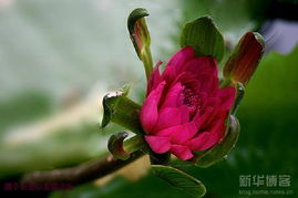 植物花卉 淮北网