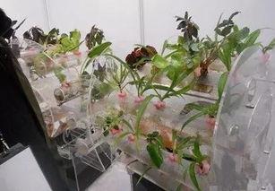家庭养花无土栽培3