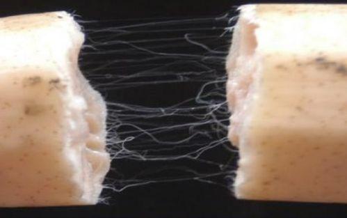 藕断丝连的丝是什么组织,藕断丝连歌曲原唱第2张-我爱代挂网